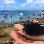 Discovering Destinations in Praia de Carneiros - Ouriço
