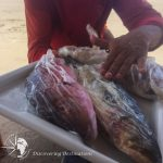 Discovering Porto de Galinhas - fish filet preparation
