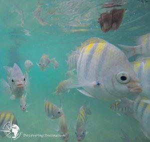 Discovering Maragogi - snorkel