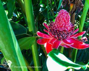 Discovering Rio Silveiras flowers