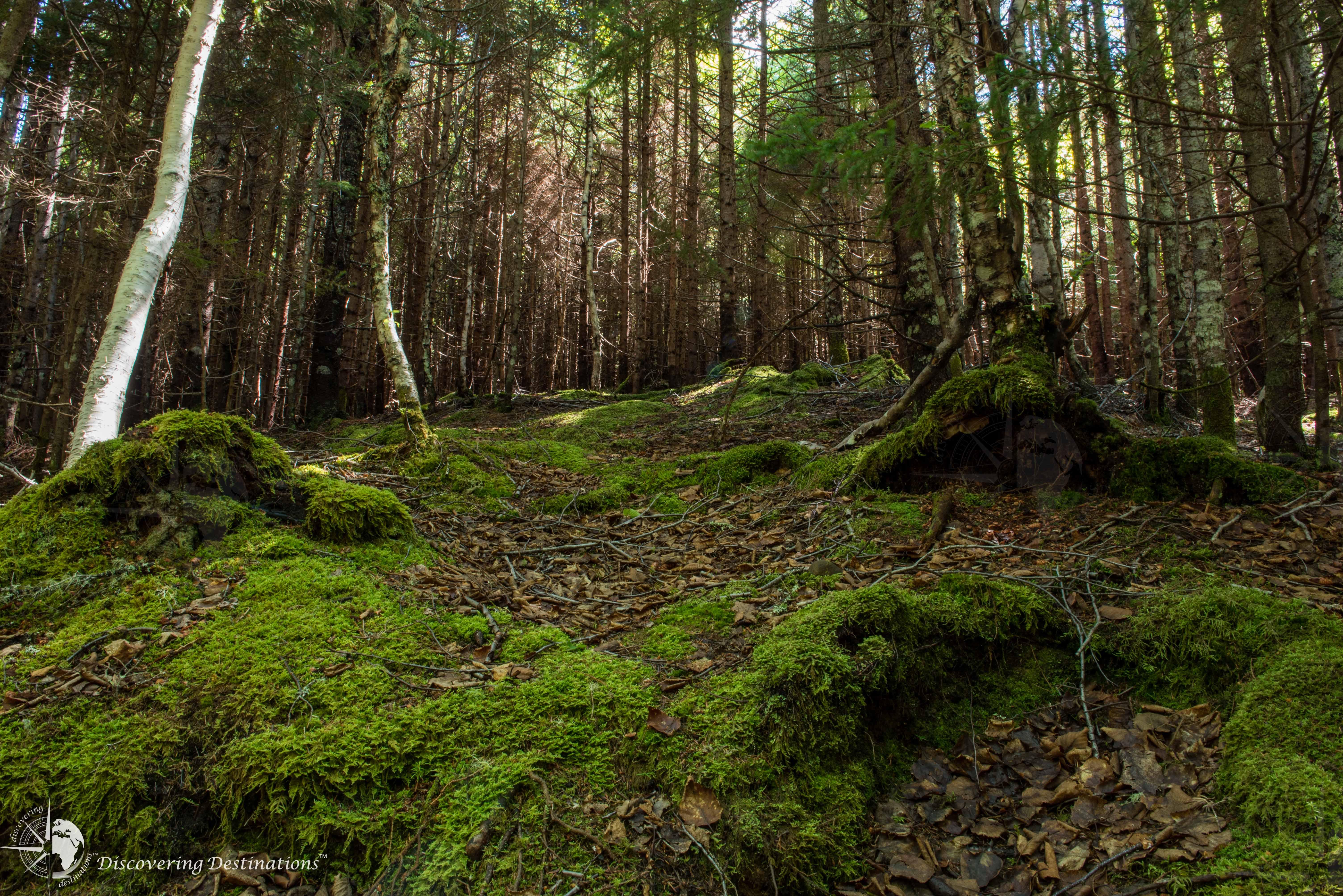 Hopewell Rocks walking trail
