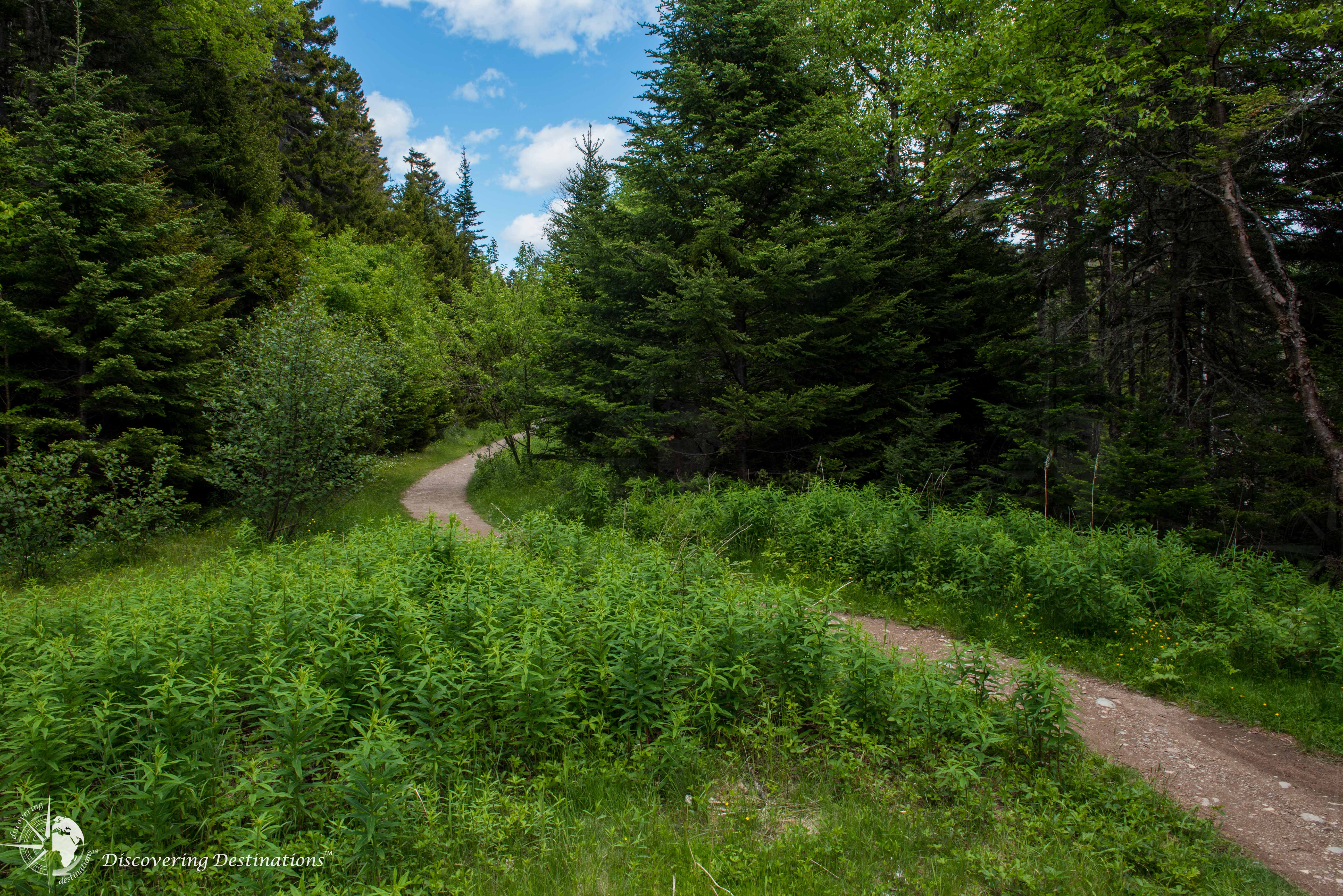 Fundy National Park hiking trail