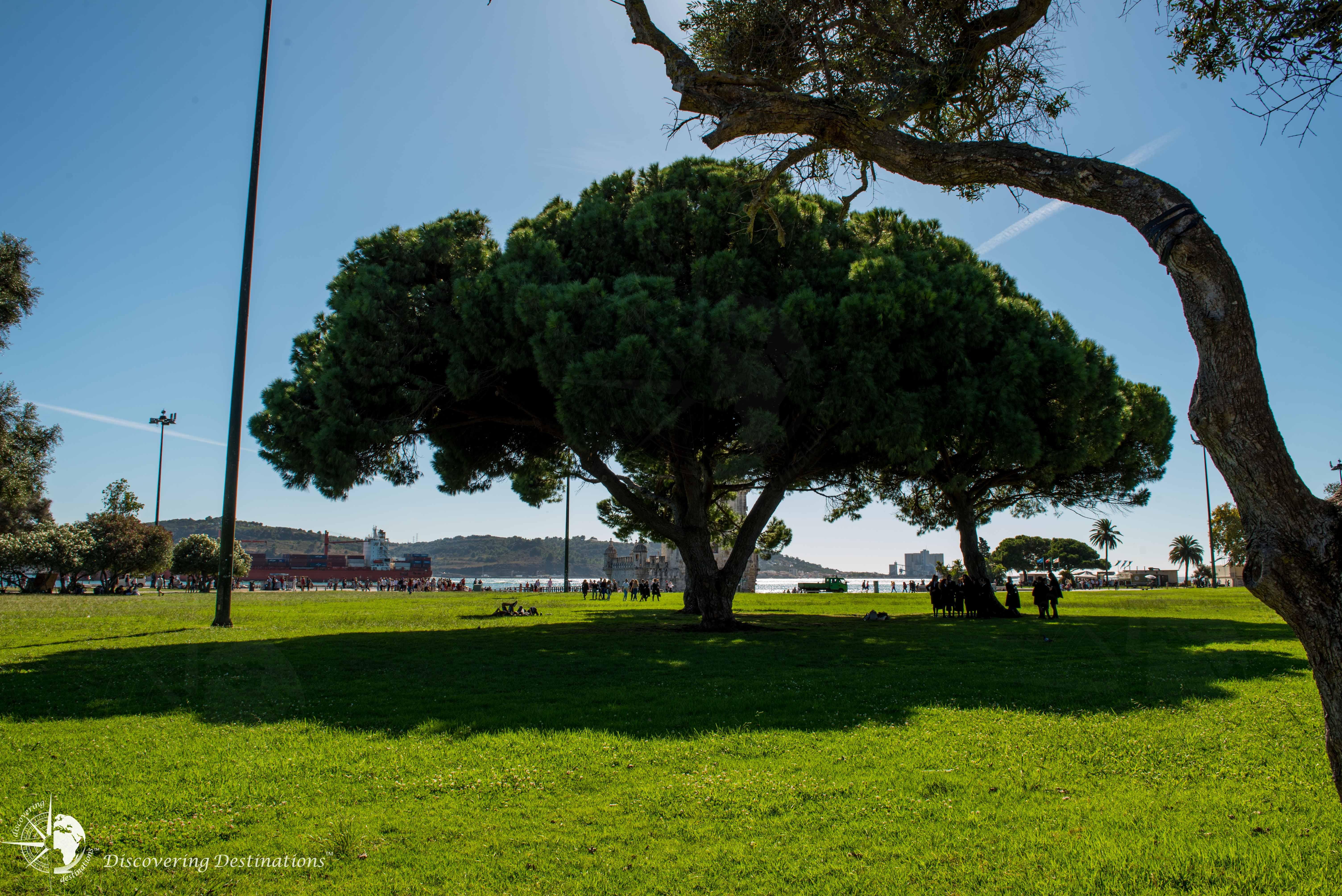 Peaceful tree