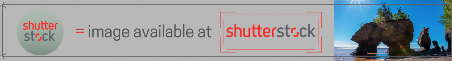 Shutterstock Banner