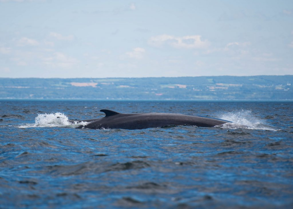 Whale watching Zodiac